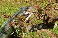 Aves e borboletas no Mangal das Garças, atração turística com restaurantes, lagos de pássaros, borbuletário e artesanato.<br /> Belém, Pará, Brasil.<br /> Foto Arlan Conceição