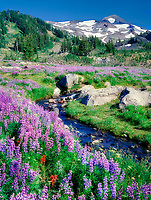 Lupines and small stream with North Sister Mountain. Three Sisters Wilderness, Oregon