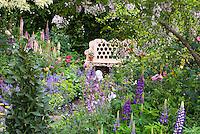 Garden bench in lush flower garden with purple Lupinus lupines, iris, peonies paeonia, etc