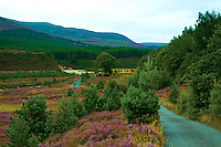 Walking through Glen Feshie, Cairngorm National Park