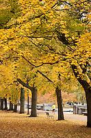 autumn color trees, Esplanade, Boston, MA