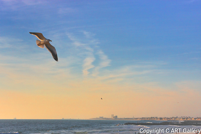 Gliding over the beach, Seal Beach, CA.