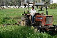 EGYPT, Bilbeis, Sekem organic farm, desert farming / AEGYPTEN, Bilbeis, Sekem Biofarm, Landwirtschaft in der Wueste, Klee Ernte