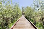 Boardwalk trail through wetland.  Auburn, WA city environmental park.