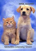 Xavier, ANIMALS, REALISTISCHE TIERE, ANIMALES REALISTICOS, cats, photos+++++,SPCHCATS885,#a#, EVERYDAY