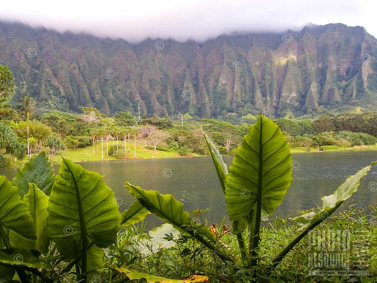 The lake and lush grounds at Ho'omaluhia Botanical Gardens, with the Ko'olau Range (or Ko'olau Mountains) in the distance, Kane'ohe, Windward O'ahu.