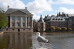 This gull in The Hague wants to talk to the prime minister about some gull issues