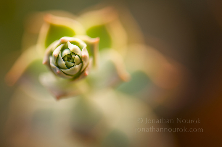 A close-up of a succulent plant.