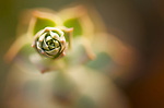 A close-up of a succulent plant.