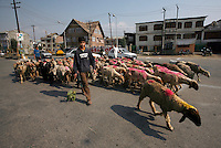 Shepherds herd a flock of sheep through an intersection in Srinagar, Kashmir,India. © Fredrik Naumann/Felix Features