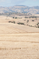 Dry hills in summer,near Adelaide, South Australia.