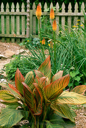 Orange plant with blooming flowers color coordinated bird garden, Missouri, USA