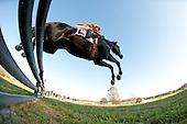 Pennsylvania Hunt Cup Races - 11/6/11