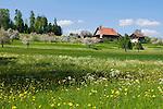 CHE, Schweiz, Kanton Thurgau, bei Steckborn, Bauernhof, Blumenwiese und Apfelbluete | CHE, Switzerland, Canton Thurgau, near Steckborn, farmhouse, flower meadow and apple blossom