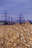 Pocerady, Czech Republic. Golden wheat with high voltage electricity power line pylons behind.