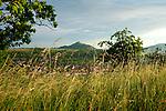 Europa, DEU, Deutschland, Baden-Wuerttemberg, Schwaebische Alb, Weilheim an der Teck, Albtrauf, Vorland der mittleren Schwaebischen Alb, Typische Landschaft, Streuobstwiese, Baeume, Hintergrund Berg (Limburg), Natur, Umwelt, Landschaft, Jahreszeiten, Stimmungen, Landschaftsfotografie, Landschaften, Landschaftsphoto, Landschaftsphotographie, <br /> <br /> [Fuer die Nutzung gelten die jeweils gueltigen Allgemeinen Liefer-und Geschaeftsbedingungen. Nutzung nur gegen Verwendungsmeldung und Nachweis. Download der AGB unter http://www.image-box.com oder werden auf Anfrage zugesendet. Freigabe ist vorher erforderlich. Jede Nutzung des Fotos ist honorarpflichtig gemaess derzeit gueltiger MFM Liste - Kontakt, Uwe Schmid-Fotografie, Duisburg, Tel. (+49).2065.677997, ..archiv@image-box.com, www.image-box.com]