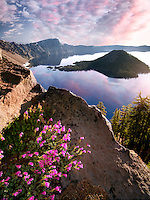 Penstemon growing on rock face of Crater Lake. Crater Lake National Park, Oregon