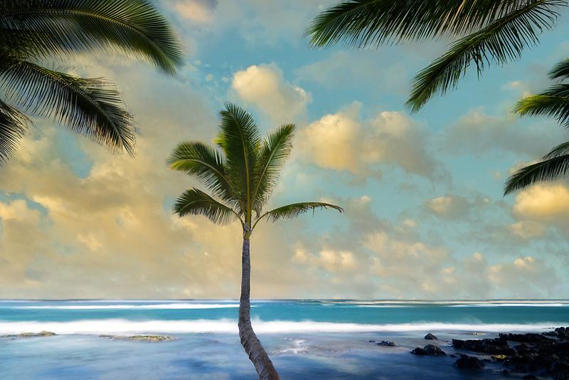 Lone palm tree, Maui, Hawaii