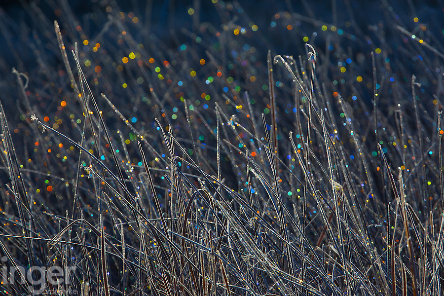 Bokeh in Frosty Grass at Bosque Del Apache, New Mexico