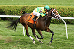 August 9, 2014: Designed for War with Javier Castellano in an 83,000 MSW for 2-year olds, going 1 1/16 mile on the turf at Saratoga Racetrack. Trainer: Todd Pletcher. Owner: Glencrest Farm, LLC, and JSM Equine. Sue Kawczynski/ESW/CSM