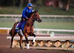 OCT 29: Breeders' Cup Turf entrant Old Persian, trained by Charlie Appleby, gallops at Santa Anita Park in Arcadia, California on Oct 29, 2019. Evers/Eclipse Sportswire/Breeders' Cup