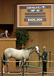 LEXINGTON, KY - September 12: Hip # 92 Tapit - Tempting Note Colt consigned by Gainesway sold for $400,000 at the September Yearling sale at Keeneland.  September 12, 2016 in Lexington, KY (Photo by Candice Chavez/Eclipse Sportswire/Getty Images)