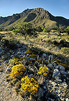 Guadalupe Mountains, New Mexico.