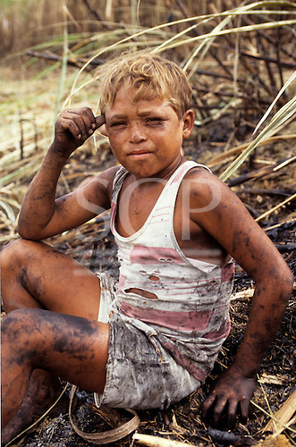 Pernambuco State, north-east Brazil. Child farm worker harvesting sugar cane.