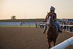 MEYDAN,DUBAI-MARCH 24: California Chrome,trained by Art Sherman,exercises in preparation for the Dubai World Cup at Meydan Racecourse on March 24,2016 in Meydan,Dubai (Photo by Kaz Ishida)