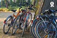 Parked mountain bikes leaning on tree trunk at sunset (Licence this image exclusively with Getty: http://www.gettyimages.com/detail/sb10066852v-001 )