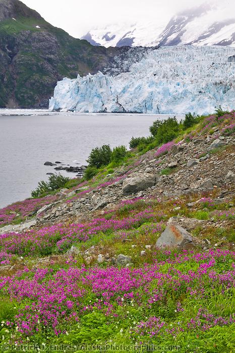 Dwarf fireweed, surprise glacier, Harriman Fjord, Prince William Sound, Alaska