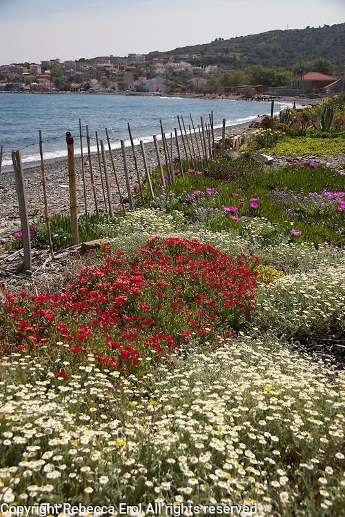 Karaburun Peninsula on the Aegean coast with town of Karaburun in background, Turkey