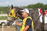 September 1, 2014: Smarty Jones Stakes contender Joint Custody enters the paddock. Protonico, Joe Bravo up, wins the grade 3 Smarty Jones Stakes at Parx Racing in Bensalem, PA. Trainer is Todd Pletcher. Owner is International Equities Holding, Inc. ©Joan Fairman Kanes/ESW/CSM