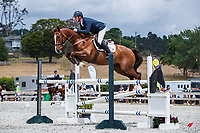 CLASS 03: Fieldline Horse Floats Horse 1.25m