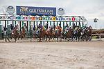 Hallandale Beach, FL- February 06: Scenes from Donn Handicap Day,  Gulfstream Park . (Photo by Arron Haggart)