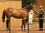 12 September 2010.  Hip #78 Malibu Moon - New Economy colt, sold for $650,000 at the Keeneland September Yearling Sale.   Consigned by Taylor Made.