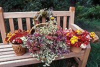 Simple wooden garden bench with harvested dried flowers from the garden, in baskets and wreaths 29940