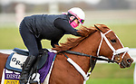 November 1, 2020: Point Of Honor, trained by trainer George Weaver, exercises in preparation for the Breeders' Cup Distaff at  Keeneland Racetrack in Lexington, Kentucky on November 1, 2020. Alex Evers/Eclipse Sportswire/Breeders Cup /CSM