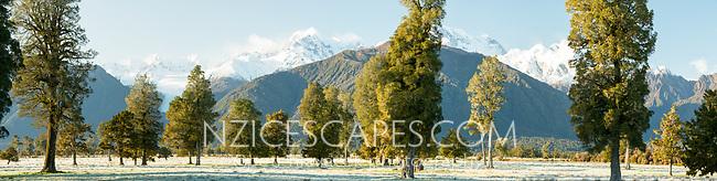 Winter farmland with Fox Glacier and Southern Alps, Westland Tai Poutini National Park, UNESCO World Heritage Area, West Coast, South Westland, New Zealand, NZ