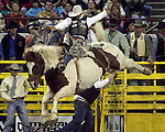 1/25/09--Photo by Rick Davis--PRCA cowboy Bradley Harter of Weatherford, Texas scores an 88 point saddle bronc ride on the bronc Mullen Hill during final round action at the 103rd National Western Stock Show and Rodeo in Denver, Colorado. Bradley finished out the rodeo with 247 points on 3 head to win the championship round.