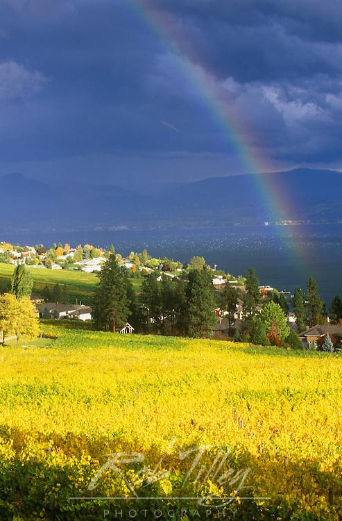 N.A., Canada, British Columbia, Okanagan Valley, Rainbow over Vineyard