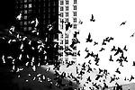 Street Photography (B&W)