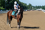 07252020:Tiz the Law works at Saratoga 2020<br />