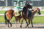 NEW ORLEANS, LA - FEBRUARY 25: Majestic Quality #4, ridden by Kent J. Desormeaux.  Rachel Alexandra Stakes, on Risen Star Stakes Day at Fair Grounds Race Course on February 25, 2017 in New Orleans, Louisiana. (Photo by Jarrod Monaret/Eclipse Sportswire/Getty Images)