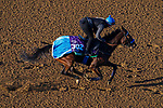November 3, 2020: Donjah, trained by trainer Henk Grewe, exercises in preparation for the Breeders' Cup Turf at Keeneland Racetrack in Lexington, Kentucky on November 3, 2020. John Voorhees/Eclipse Sportswire/Breeders Cup/CSM