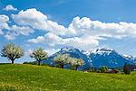 Deutschland, Bayern, Oberbayern, Berchtesgadener Land, Bischofswiesen: Fruehlingswiesen vorm Hochkalter | Germany, Bavaria, Upper Bavaria, Berchtesgadener Land, Bischofswiesen: spring meadows and Hochkalter mountain