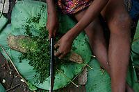 Preparation of a sauce with Koko leaves. These liana grow in the shade of the forest. They are a legume and its leaves are rich in protein. They are used as a vegetable and in sauces. ///Préparation d'une sauce avec des feuilles de Koko. C'est une légumineuse. Cette liane pousse dans l'ombre des forêts ses feuilles sont riches en proteïnes. Elles sont utilisées comme légume et dans les sauces.