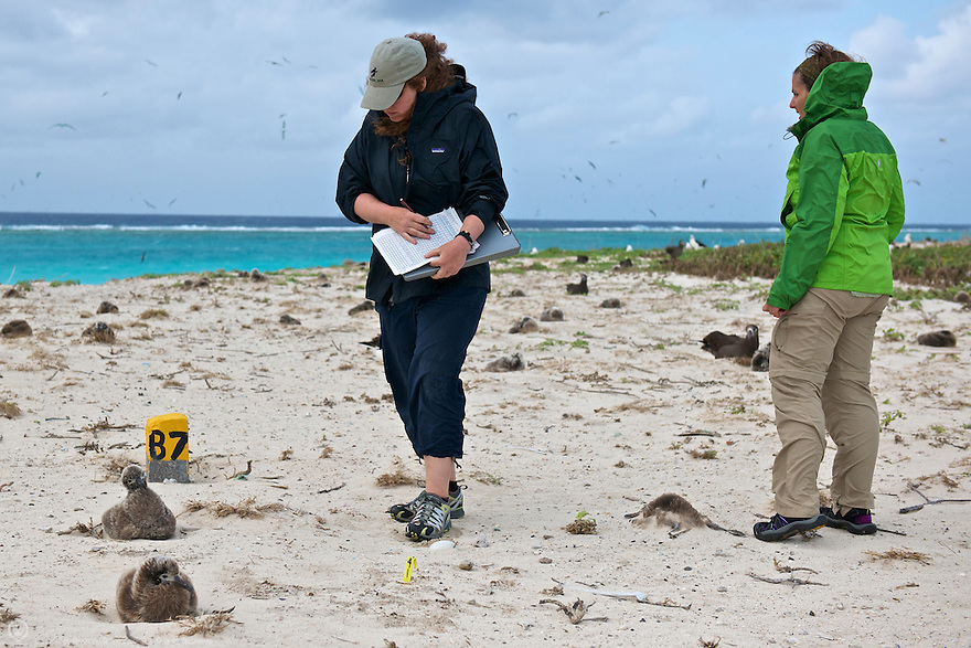 Volunteers monitor the Black-footed Albatross plot on Sand Island in Midway Atoll.  Without the help of volunteers we'd never know the statistics of survival and species trends.<br /> <br /> Learn how you can become a Midway volunteer:<br /> http://www.fws.gov/midway/volunteer.html