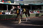 Kauai Katiein the walking ring prior to her win in the Forward Gal (G2) at Gulfstream Park.  Hallandale Beach Florida. 01-26-2013