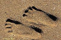 ON03-023z  Ocean - foot prints on sandy beach